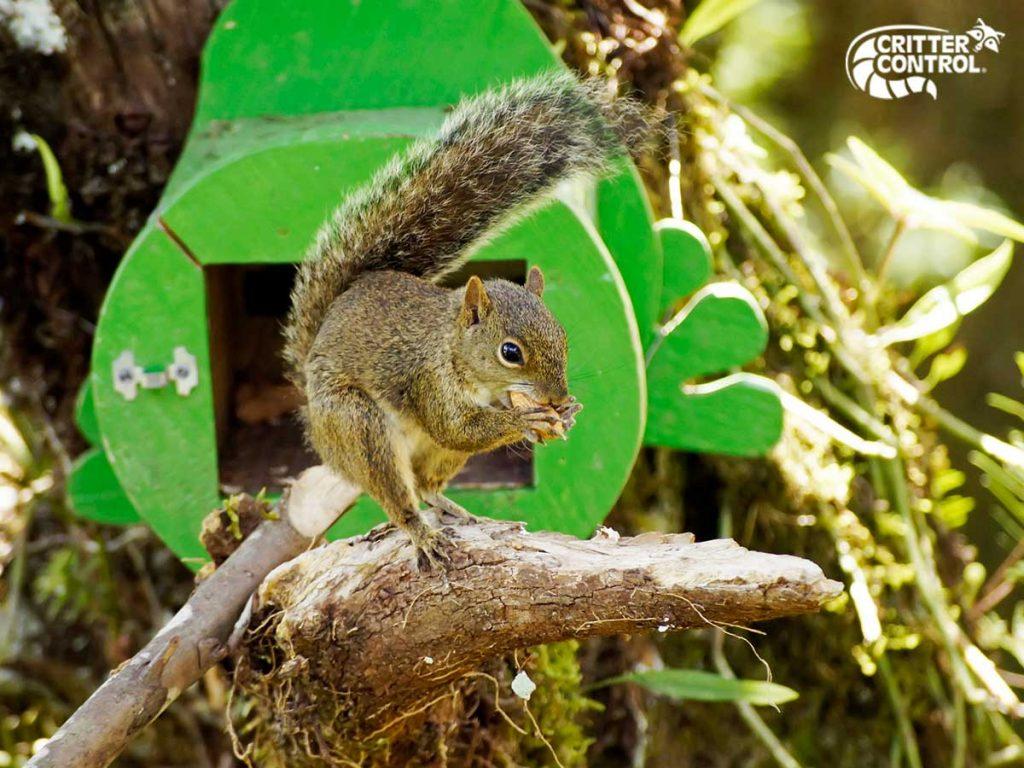 5 Ways to Get Rid of Squirrels