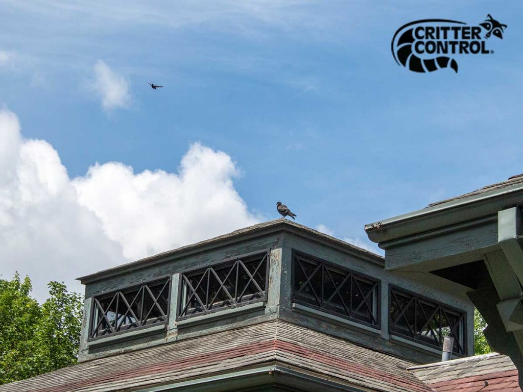 Bird Removal Services in Allison Park