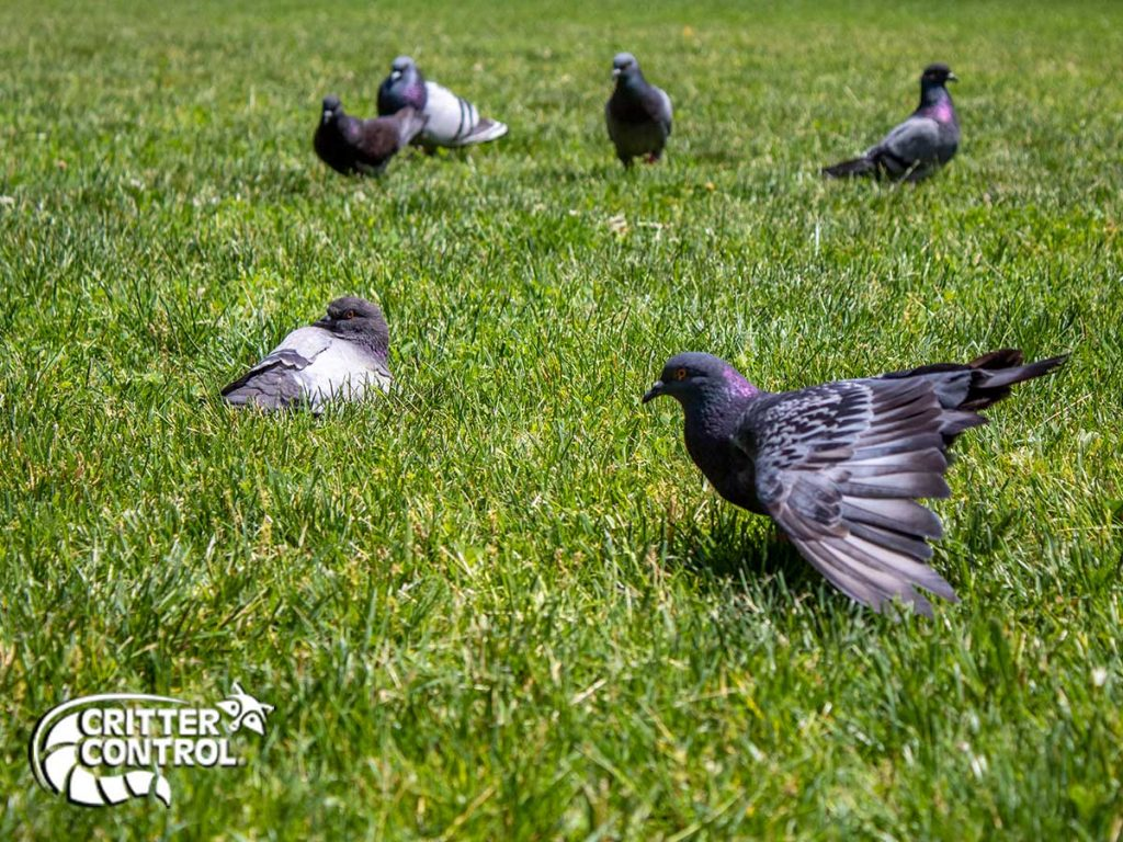 Bird Removal Services in Gibsonia
